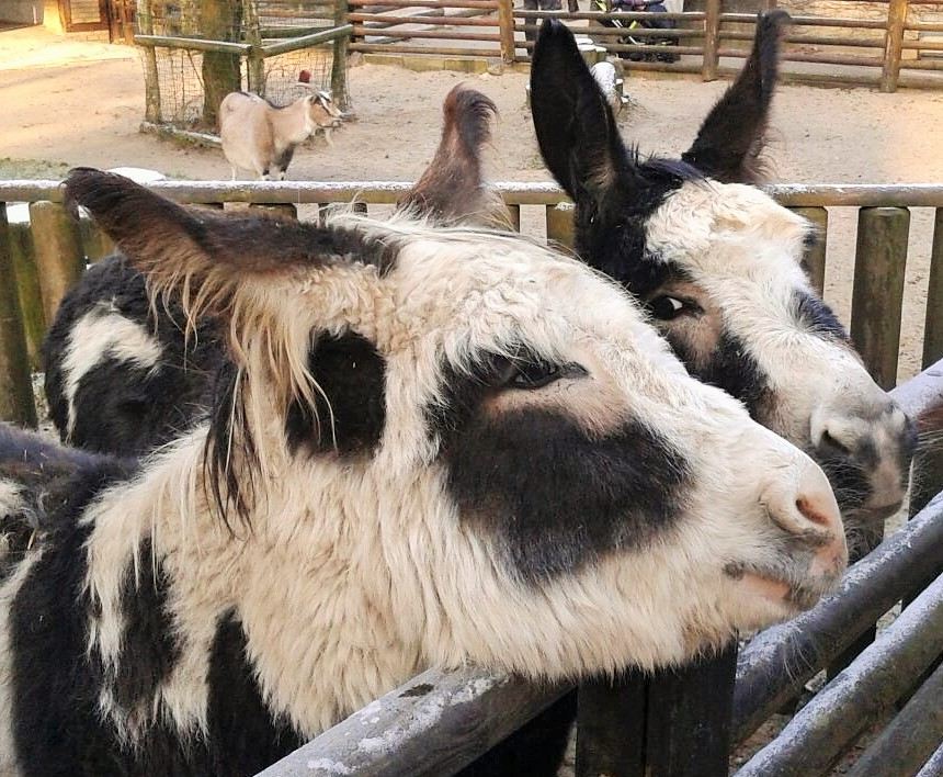 Mit den Tieren sprechen / Tierkommunikation  TEIL 2.