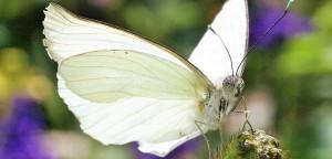butterfly-50644_1280-2