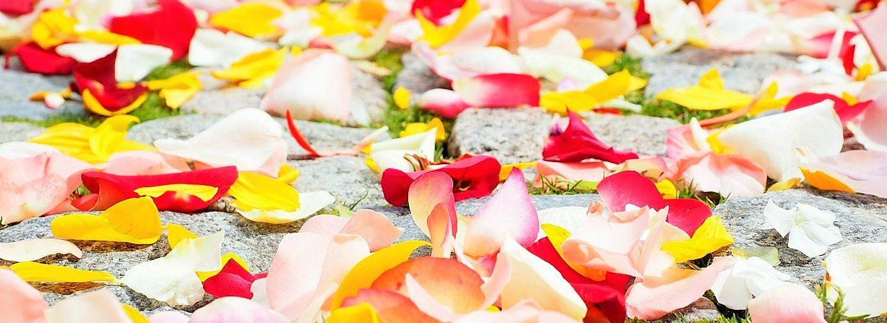 Spirituelle Begleitung/Beratung, Fernheilbehandlungen und Botschaften der geistigen Welt zur Unterstützung für Deinen individuellen Weg in die eigene goldene Mitte, Zufriedenheit, Gesundheit und Selbstermächtigung.