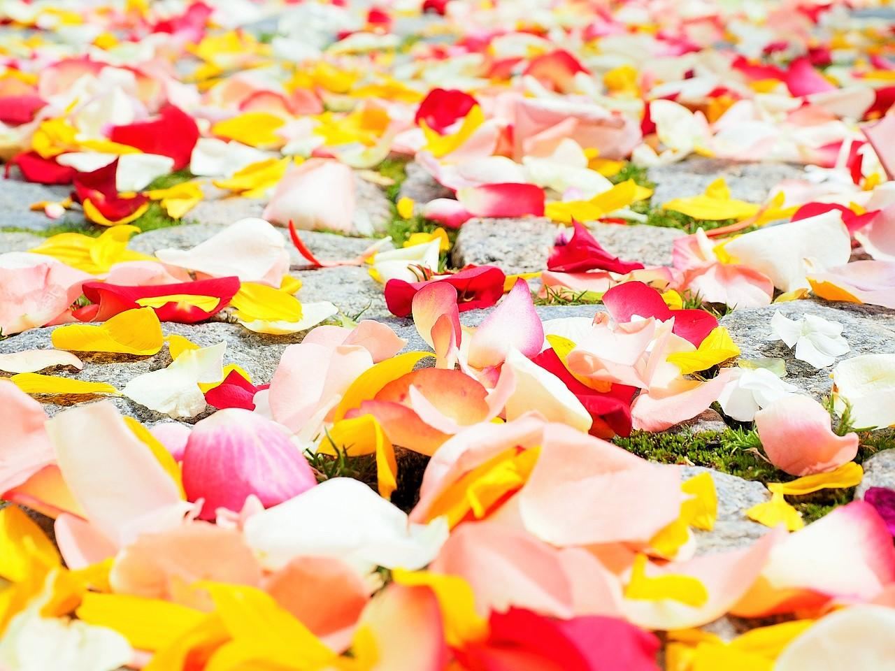 rose-petals-693570_1280 (2)