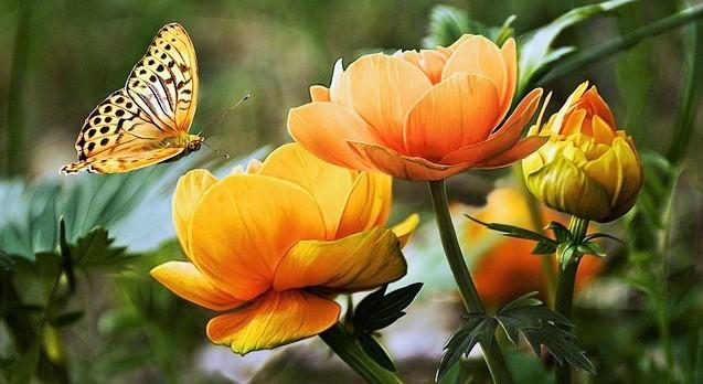 http://www.katharina-sieglinde-soreia-helmich.de/wp-content/uploads/2017/03/flowers-19830_640-3.jpg
