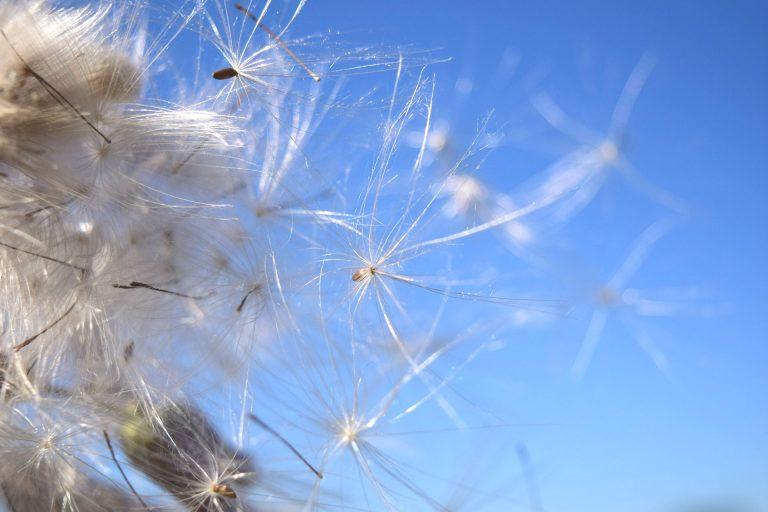 http://www.katharina-sieglinde-soreia-helmich.de/wp-content/uploads/2017/12/flying-seeds-1533742_1920HELLER-768x512.jpg